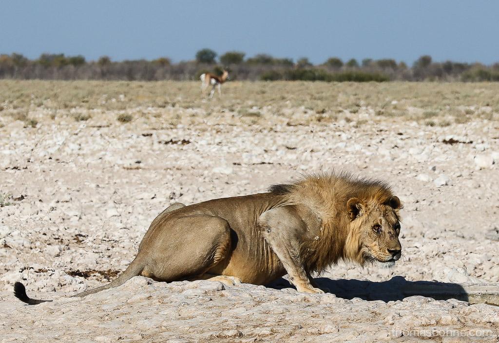 bea-la-panthere-fitness-lifestyle-blogger-blog-vegan-hamburg-muenchen-munich-germany-deutschland-namibia-afrika-offroad-1